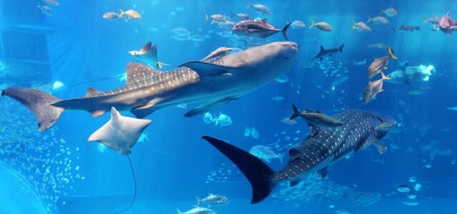 美ら海水族館到着
